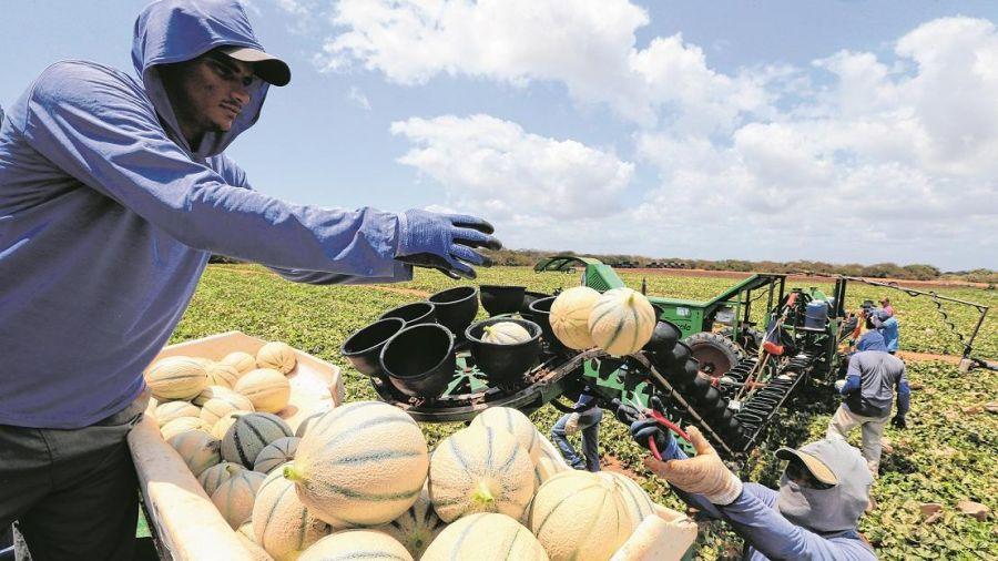 Ceará tem potencial para quadruplicar área irrigada, diz secretário
